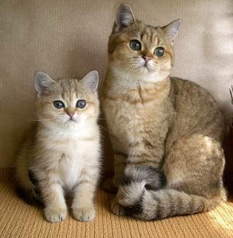 Кошки манипулируют людьми с помощью мурлыканья.