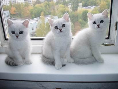 ноября воронеж выствка кошек.